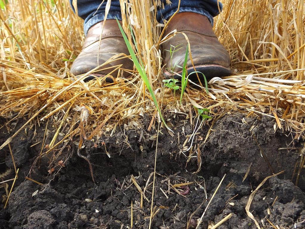 beplanting en levende bodem tuincursus online
